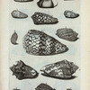 [Volutæ:] H. Vespertilio; I. Vespertilio altera; II. Melicera, seu Fafago, et  Melicembalis Plinii; K. Harpa; L. Harpa Nobilis; M. Harpa Minor; N. Voluta marmorata; Fig. 1. (Belg.) Harts-hoorn met banden; O. Voluta pennata; P. Voluta pennata altera; Q. Voluta maculosa; R. Voluta cinerea; S. Voluta spectrorum; T. Voluta maculosa granulata.