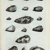 [Volutæ:] W. Voluta filosa; X. Voluta fasciata; Y. Voluta fasciata secunda; Z. Voluta arenata;  AA. Valuta arenata altera; Fig. 2. Voluta arenata tertia; BB. Musica Rusticorum; CC. Anus, seu Monachus Leucophæus; DD. Anus granulata; EE. Terebellum granulatum; FF. Voluta fluviatilis; GG. (Belg.) Boter-wegje van Boero, of Cyperse Kat Toot; HH. Auris Midæ; Fig. 3. Nigella vera; Fig. 4. Nigella.