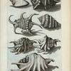 Cochleæ Alatæ: A. Harpago Mas; B. Harpago Foemina; C. Harpago tertius; D. Harpago quartus; E. Cornuta, seu Heptadactylus Plinii; F. Cornuta, seu Heptadactylus Plinii alter; H. Cornuta Decumana.
