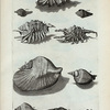 [Cochleæ Alatæ: ]G. Cornuta Foemina; I. Cornuta millepeda; K. Cornuta nodosa; L. Alata lata; M. Epidromis; N. Epidromis gibbosa;  O. Epidromis altera; P. Epidromis minima; Fig. 6. (Belg.) Geband Lap-hoorntje; Fig. 7. (Belg.) Tweede geband Lap-hoorntje.