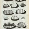 Porcellanæ Majores: A. Porcellana guttata; B. Porcellana montosa; C. Concha testudinaria; D. Argus; E. Caput anguinum; F. Caput anguinum minus; G. Caput anguinum tertium; H. Gibba; I. Talpa; K. Carneola; L. Pocellana salita; M.  Porcellana literata, sive Arabica; N. Porcellana lentiginosa;  O. Variolæ; P. Variolarum altera species; Q. Ovum.