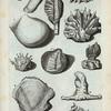 A. Ostreum Cratium; B. Ostreum Placetiforme, sive Ephippium; C. Ostreum plicatum majus; D. Ostreum plicatum minus; E. Ostreum Echinatum; F. (Mal.) Telinga Andyn; G. Est secunda species antecedentis; H. Ostreum divisum; I. (Græc) Istgnomon (..); K. Ostreum tortuosum; L. Ostreum Electrinum; M. Mitella; Fig. 1. Ostreum admodum rarum.