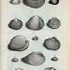 Conchæ Bivalviæ: A. Chama circinata; B. Chama litterata oblonga; C. Chama litterata rotunda; D. Chama pectinata; E. Chama scobinata; F. Favus; G. Lingua tigerina; H. Chama granosa; I. (Mal.) Remies;  K. Toede baya; L. (Belg.)  Xulaneesche Letterschulpje, of Tour de Bra; N. (Mal.) Remies Gargadja; O. (Belg.) Een ander zoort van Remies, Scherfje genoemt.
