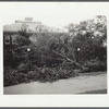 Tree in front of the Brooklyn Ave. schoolhouse after the hurricane