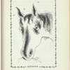 Paul's Horse Herman
