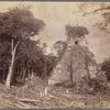 Tikal, Province of Petén, Guatemala