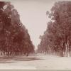 Unknown boulevard