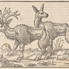 A Stag and a Hind