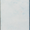 Halidrys siliquosa β minor