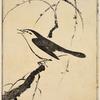 A singing bird