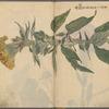 Sketchbook, [no. 1]
