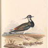 "Watercolor of bird at the shore, signed ""Pitman 1823"", leaf 21 (recto)"