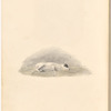 Watercolor of a sleeping dog, leaf 34 (verso)