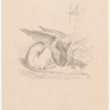 Drawing of the Gryphon asleep