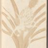 Dissertation sur la generation et les transformations des insectes de Surinam: dans laquelle on traite des vers et des chenilles de Surinam, des plantes, fleurs, & fruits dont ils vivent & dans lesquels on les a trouvez