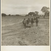 Leveling the land for irrigation on the Bosque Farms project. The tract of two thousand four hundred acres to be cultivated under irrigation. New Mexico