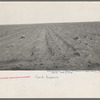 An example of how listing soil into furrows helps impede erosion. Mills, New Mexico
