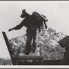 Cotton picker. San Joaquin Valley, California