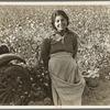 Cotton picker. Southern San Joaquin Valley, California
