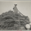 Harvesting oats. Clayton, Indiana