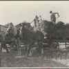 The threshing of oats, Clayton, Indiana. July 1936
