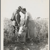 Mexican townfolk sacking peppers near Stockton, California.