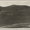 The pea fields of the California coast