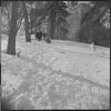 Sledding in Central Park. New York, NY