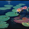 Water lilies. New York, NY
