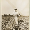 Sharecropper of the Mississippi Delta. Issaquena County, Mississippi.