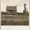 Plantation cabin of sharecropper. Washington County, Mississippi.