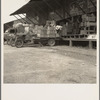 Tomato packing shed for packing and shipment north. Hazlehurst, Mississippi