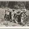 Hillhouse, Mississippi Delta cooperative farm