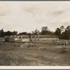 Lumber mill in the piney woods, showing dry stacking. Texas.
