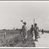 Cotton hoers (day laborers) move from one field across the highway to another. Mississippi Delta