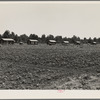 Delta cooperative farm cabins and cotton. Hillhouse, Mississippi, after one year of operation.