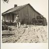 Colored tractor driver and empty cabin on mechanized cotton plantation. Aldridge Plantation near Leland, Mississippi