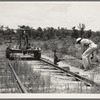 Pulling out the railroad tracks which lead to the closed sawmill. Careyville, Florida.