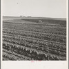 Contour plowing on mechanized farms. Childress County, Texas Panhandle, Texas