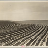 Contour plowing on mechanized farm of the Texas Panhandle.