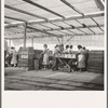 Women packing apricots in large open sheds adjoining the orchards. Brentwood, California.