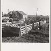 Farmyard of rural rehabilitation client. Tulare County, California