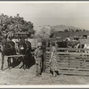Rural rehabilitation, Tulare County, California. This farm couple have been assisted to independence. In Feburary 1936 they rented a neglected farm of forty acres planted in grapes. They had no equipment, no stock, no seed, no money