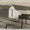 Contra Costa County, California. Cowbarn and hills, California dairy ranch.
