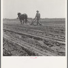 Between Laton and Fowler, central San Joaquin Valley, California. One man-one horse methods are rare in California.