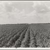 Delta plantation landscape south of Wilson, Arkansas.