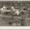 Farm Security Administration (FSA) temporary camp for migrants. Gridley, California. Peak of the season is August.