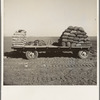 Kern County, California. Supply of fertilizer and potato seed on edge of field in which mechanical potato planter is operating.