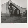 Supper time in Farm Security Administration (FSA) migratory emergency camp for workers in the pea fields. Calipatria, California.