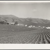 Ranch camp for pea pickers. Near Milpitas, Santa Clara County, California.